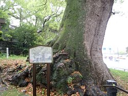 入口の厄除けの夫婦楠。樹齢約1千年だそうです。これが1対あります。