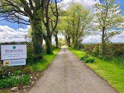Woodovis Park Drive Way