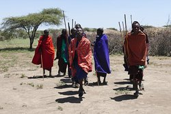 Great visit to the Masai village after a game drive in the Serengeti