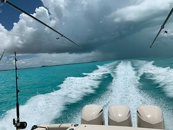 Tuna run!   Bonus: Seeing pilot whales beside the boat!