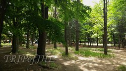 Yangjae Citizens' Park