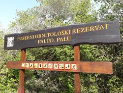 Palud,jedini rezervat za ptice u Istri gdje vlada stroga tisina  i mir,samo se cuje pjesma ptica