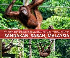 Sepilok Orangutan Rehabilitation Centre