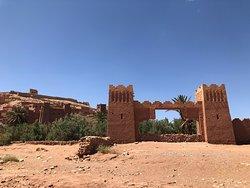 Camel trekking with Mohamed