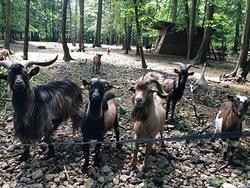 Parc Animalier de Janvry