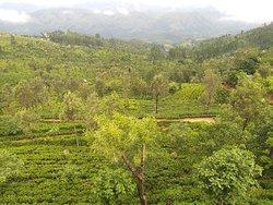 Tours for Sri Lanka