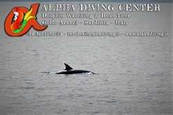 Alpha Diving Center - La Casa delle Sirene