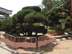 Inside Kishkindha Molika Bonsai Garden