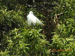Inside Ranganathittu Bird Sanctuary