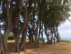 The trees leading to the beach