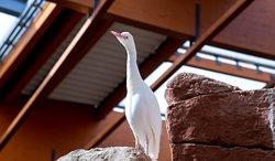 Bialy ptak