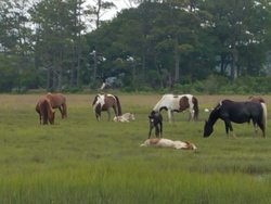 Just a few of the ponies in the band we saw.