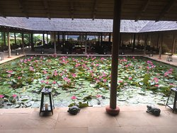 Lily pond, lobby area. Frog concert is free!