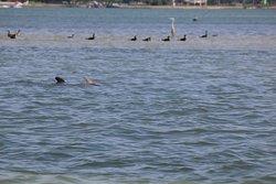 Dolphins/birds