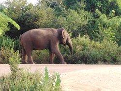 Udawalawa Wild Safari