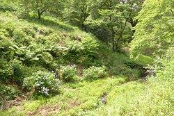 Tama Forest Science Garden