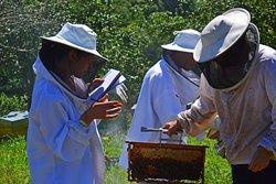 Vestidos de apicultores para descubrir el mundo secreto de las abejas.