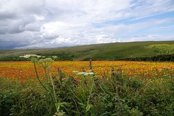 What a beautiful sight, the poppies and wild flower meadows.