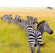 Kenya Incentive Tours & Safaris - Day Tours