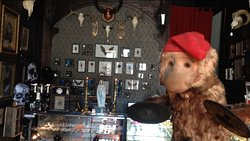 Inside of shop. Taxidermy and Entomology for sale.