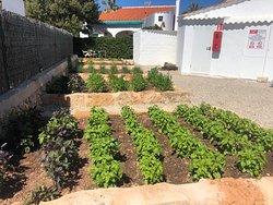 Vegetables garden / Jardín de Plantas Aromáticas