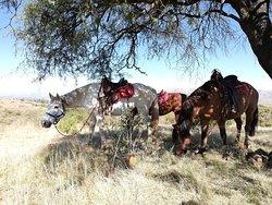 Horseback Riding Sucre