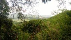 Thailand jungle.