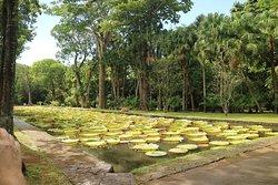 SSR Botanical Garden Mauritius