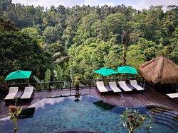 Good Morning at the jungle