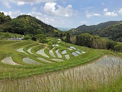 Oyama Rice Terraces