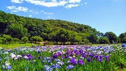 Kitayama Park
