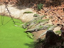 Katchikally Crocodile Pool