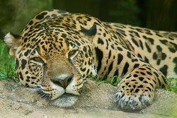 Alexandria Zoological Park