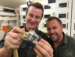 The Australian Reptile Park is the only place in Australian that milks terrestrial venomous snakes for their venom to make into antivenom