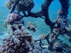 Taken on the Reef directly in front of Scuba Seekers