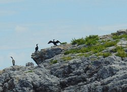 Cormorants posing - seen on Round Robin from Brixham to Teignmouth - fabulous 2-hour cruise.
