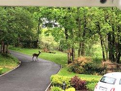 Beautiful deer each day