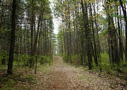 Beautiful wooded trails