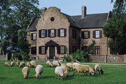 Middleton place house with sheep roaming