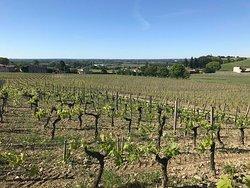 Vue sur la Dordogne  Coteaux du Fronsadais  Château Gaby