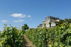 Vue sur le château Gaby  depuis les vignes