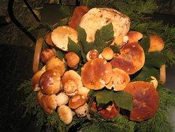 i funghi di calizzano