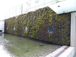 Green wall outside