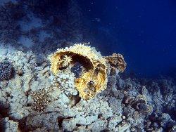 unten im Meer
