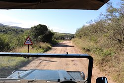 Road to elephant interactions