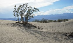 mesquite flats sand dues, death valley np