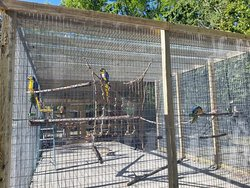 Our Macaw Aviary, installed back in April, houses 8 gorgeous rescued Macaws.