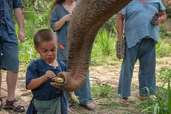 """Maerim elephant sanctuary  """"Where elephant are loved and respected """""""
