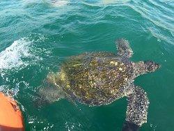 Nadando con Tortugas en El Nuro