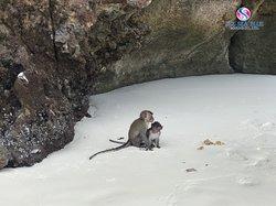 I ❤️ See Sea Blue Marine #ขอขอบคุณที่ไว้วางใจ #monkey #beach #sea #หาดลิง #ทะเล #พีพี #phiphi #jamesbond #trip #phuket #ซีซีบลู #เหมาลำ #private #Sunset #Sunrise #thank
